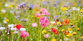 Summer blooms wallpaper