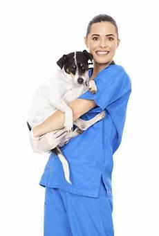 vet help direct vet reviews best uk vet awards