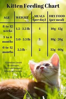 Kitten Eating Chart Feeding Your Kitten Feeding Kittens Kitten Food Kittens