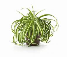 Low Light Pet Safe Indoor Plants 15 Air Purifying Plants You Need In Your Home Best Air