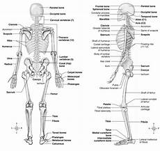 Anatomic Chart Skin And Wound Inspection And Assessment Musculoskeletal Key