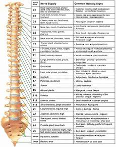 Chart Of Nerves In Back Nerve Function Charts