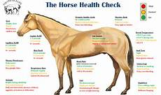 Healthy Horse Weight Chart How To Videos To Determine Your Horse S Health Ecoequine