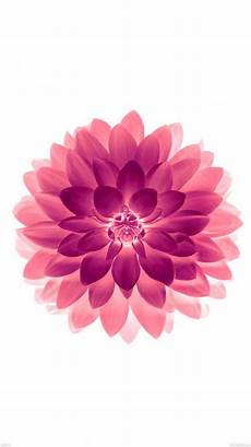 phone flower wallpaper apps tap and get the free app nature pink flower white stylish