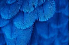 iphone blue feather wallpaper macro feathers blue wallpapers hd desktop and mobile