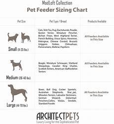 American Cocker Spaniel Size Chart Working Cocker Spaniel Size Chart