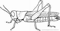 ausmalbilder insekten ausmalbilder