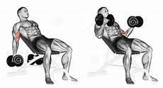 dicas de fitness para compartilhar bicep workout with images biceps workout bicep