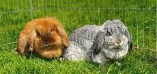 costruire gabbia conigli pro e contro nell avere un coniglio come animale domestico