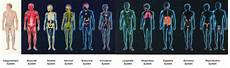 11 Body Systems Human Body Systems