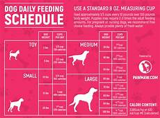 Puppy Food Chart By Age Pin On New Dog Owner Tips First Time Dog Owner Advice