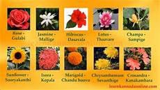 Flower Chart With Names And Pictures Flower Names Kannada Flower Names In Kannada Through