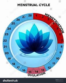 24 Day Menstrual Cycle Chart Menstrual Cycle Chart Average Twenty Eight Menstrual