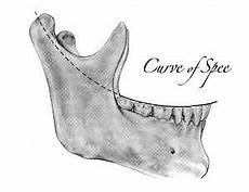 Curve Of Spee The Leading Edge The Lower Incisal Edge Position