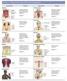 11 Body Systems Systems Of The Body Cheat Sheet By Davidpol Download