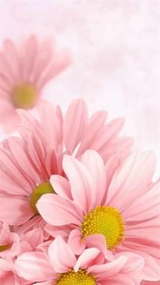 flower wallpaper for cell pin de beautybysherrie em iphone wallpapers bonitos