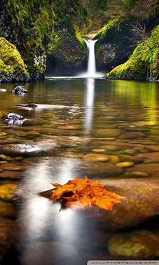4k Nature Wallpaper For Mobile 1920x1080 by Yellow Leaf In The River Ultra Hd Desktop Background