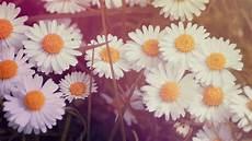 Flower Wallpaper For Laptop by Vintage Flower Wallpaper 183 Free Stunning Hd