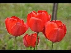 immagini piã di fiori foto di fiori