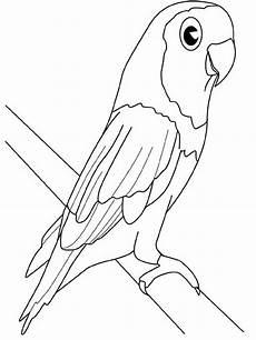 ausmalbilder malvorlagen papagei kostenlos zum