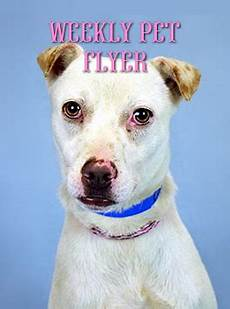 Pet Flyer Pit Stop Archives Humane Society Of Broward Countyhumane