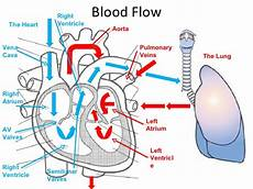 Chart Of Blood Flow Through Heart Heart Diagram