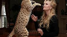 Bengal Cat Size Chart Wow Bengal Cats Size And Weight Youtube
