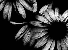 Black And White Widescreen Black And White Art Photography 2 Widescreen Wallpaper
