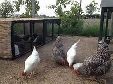 allevamento animali da cortile progetto ecologico orticoltura e allevamento live sett 71