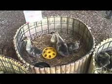 fiera animali da cortile inaugurata l edizione 2015 della nuova fiera di bagnaia la