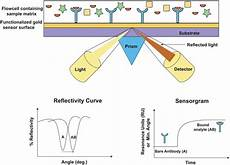 Surface Plasmon Resonance Cheng Research Lab Surface Plasmon Resonance Spectroscopy