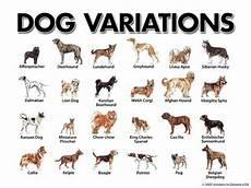 Dog Name Chart 227 Best Dog Breeds Genetics Conformation Images On