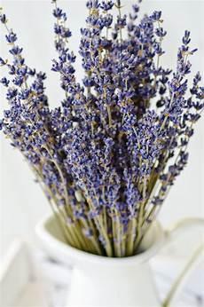 piante per da letto 12 piante perfette per la da letto fito