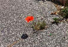 fiori tra l asfalto un fiore nel cemento l intellettuale dissidente