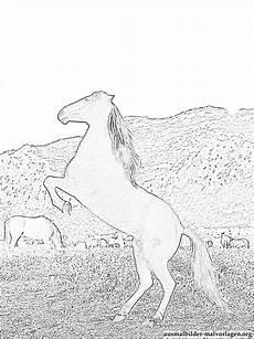 Malvorlagen Uhr Pferd Ostwind Pferd Ausmalbilder Kostenlos Und Gratis Malvorlagen