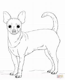 Ausmalbilder Hunde Chiwawa Chihuahua Coloring Pages And Print For Free