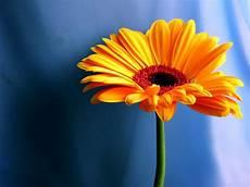 computer wallpaper flower flower desktop wallpapers wallpaper cave