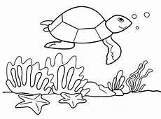 Malvorlagen Unterwasser Tiere Malvorlagen Unterwasser Ausmalbilder