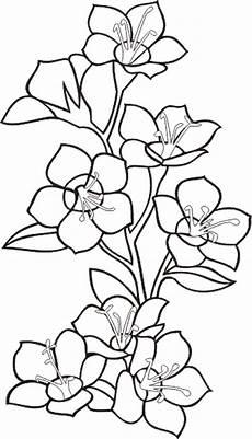 fiori da disegnare fiori e piante 3