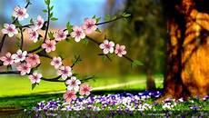 live flower wallpaper for desktop 50 beautiful flower wallpaper images for