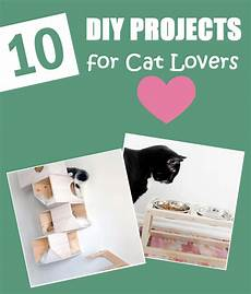 10 diy projects for cat