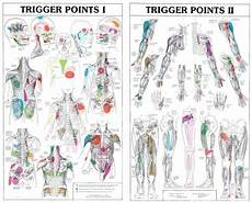 Trigger Point Chart Referral Patterns For Common Quot
