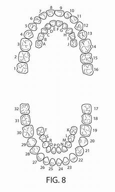 tooth numbering tooth numbering and naming dental assistant study
