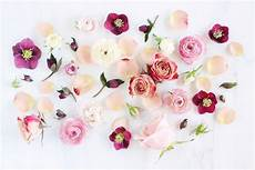 Minimalist Aesthetic Flower Wallpaper by Aesthetic Flowers Wallpapers Wallpaper Cave