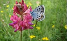 Mariposas Y Flores Imagenes Hilandy Fondo De Pantalla Mariposa En Flor