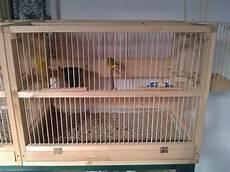 gabbia x canarini costruire gabbia per uccelli tutta in legno curiosit 224 web
