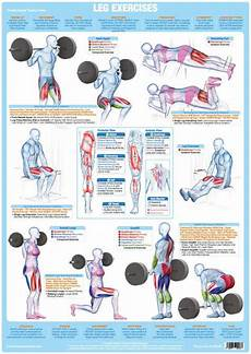 Weight Training Exercises Chart Leg Muscles Weight Training Exercise Chart Chartex Ltd