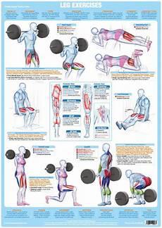 Leg Muscles Weight Training Exercise Chart Chartex Ltd
