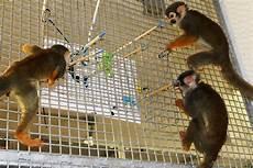 squirrel monkeys painting caldwell zoo animal