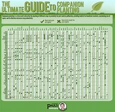 Guide Chart The Ultimate Guide To Companion Planting Home And